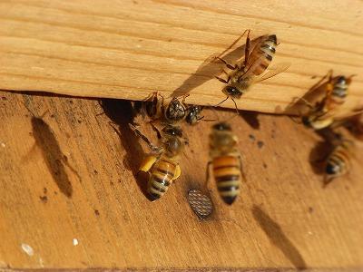 20130319bring_pollenback.jpg