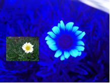 20130422-04flower_UV.jpg