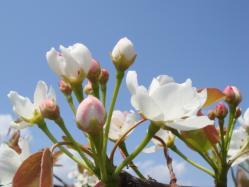 花のつぼみ_2