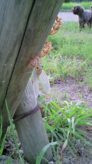 DSCF0397_convert_20100818122704.jpg