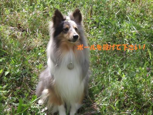 DSCF3497-1convert_20110427141454.jpg