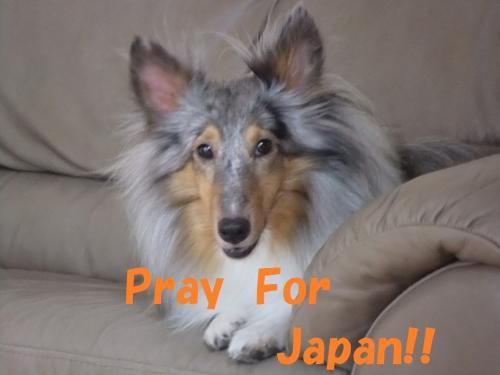 japan1_convert_20110323215417.jpg