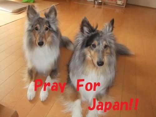 japan4_convert_20110323215600.jpg