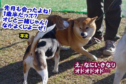 平ちゃん 1