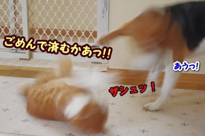 にぼし 6