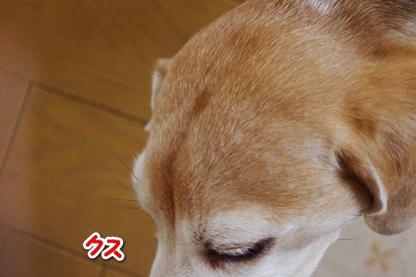 ひなちゃん 5