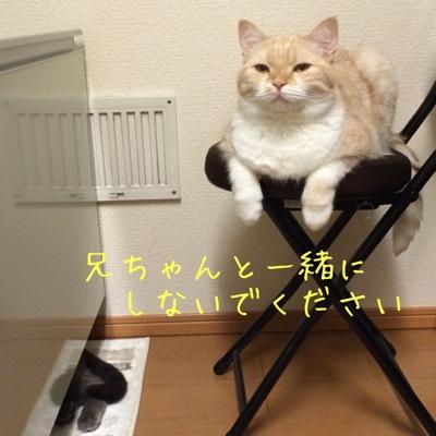 fc2blog_201411261918504df.jpg
