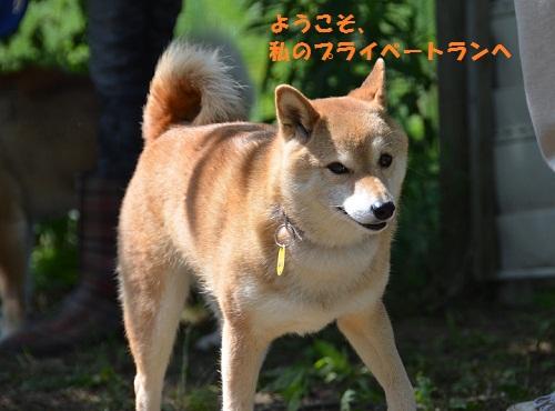 47akoyu.jpg