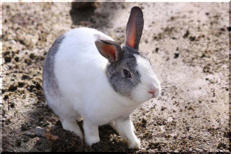 ~ ウサギ1