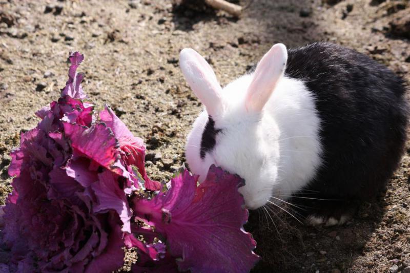 ~ ウサギ2