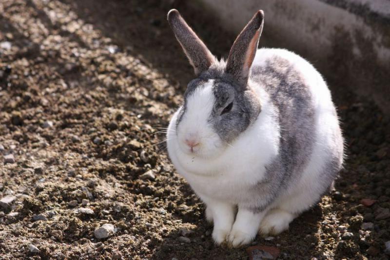 ~ ウサギ4