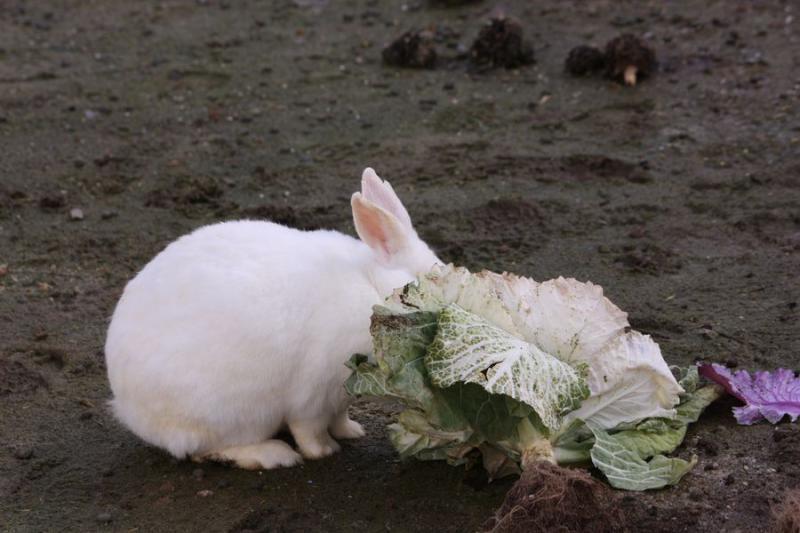~ ウサギ5