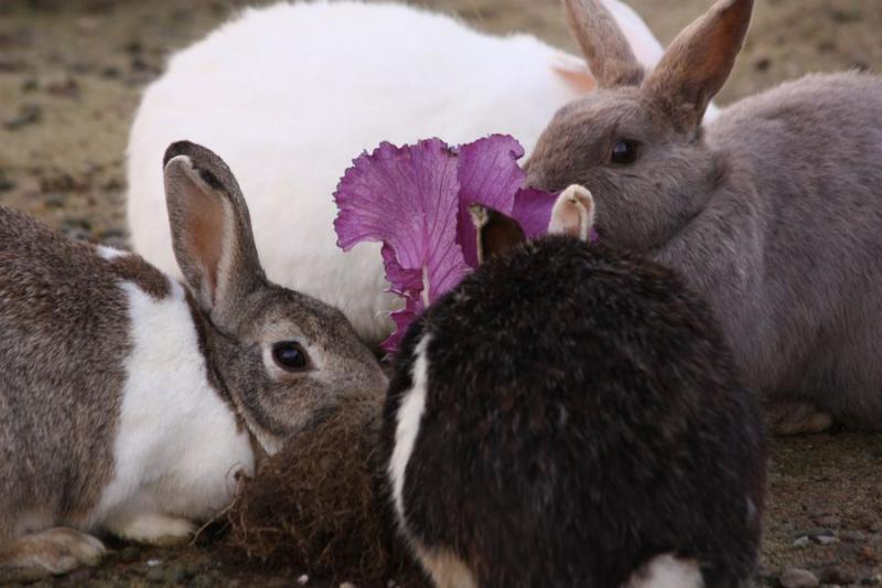 ~ ウサギ7