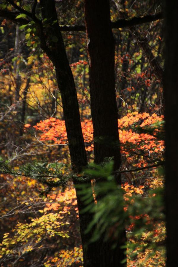 ~ 森林公園4