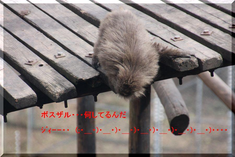 ~ ヤクニホンザル2