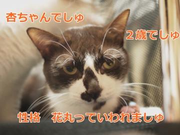 001_convert_20131106163747.jpg