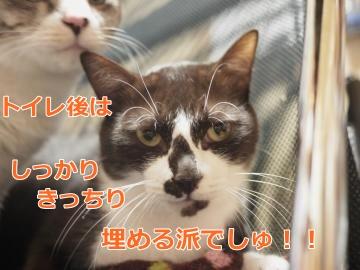 002_convert_20131106163942.jpg