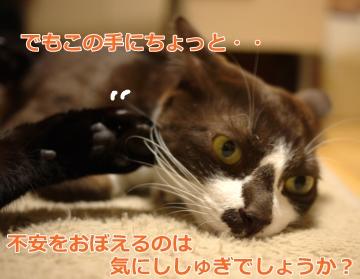 006_convert_20130203153219.jpg