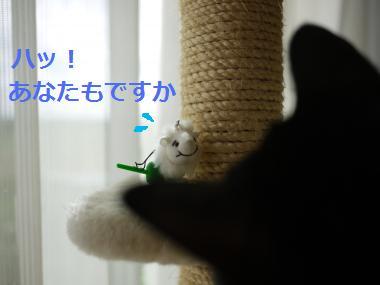 020_convert_20111005163325.jpg