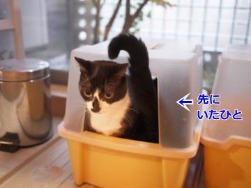 054_convert_20131106171115.jpg