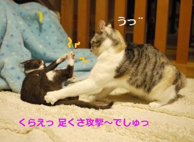055_convert_20111208184751.jpg
