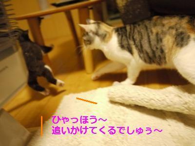 076_convert_20111208193846.jpg