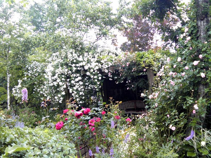 山中湖Tさんの庭
