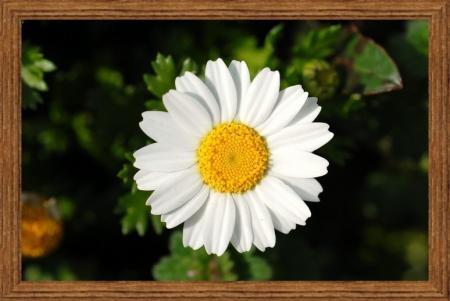 sub_image.jpg
