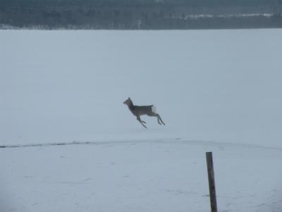 逃走する鹿