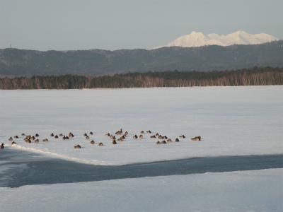 3月15日の湖