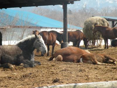 春です!眠たい馬たち