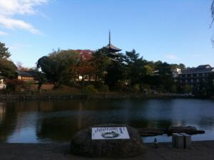 sarusawa1121_convert_20111121111949.jpg