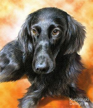 ペット肖像画 ペットの絵 ペット画 似顔絵 イラスト 犬 いぬ 小犬 子犬 フラットコーテッドレトリバー 黒毛 色えんぴつ画 色鉛筆画