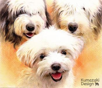 ペット肖像画 ペットの絵 ペット画 似顔絵 イラスト 犬 いぬ 小犬 子犬 マルチーズ OES オールド・イングリッシュ・シープドッグ 色えんぴつ画 色鉛筆画
