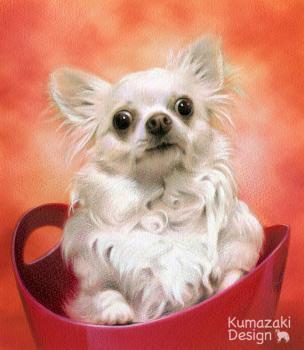 ペット肖像画 ペットの絵 ペット画 似顔絵 イラスト 犬 いぬ 小犬 子犬 チワワ 色えんぴつ画 色鉛筆画