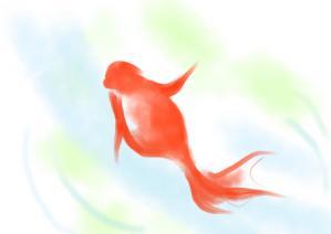 開運 金魚2