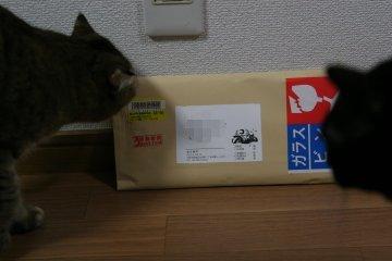 kotasuzu280.jpg
