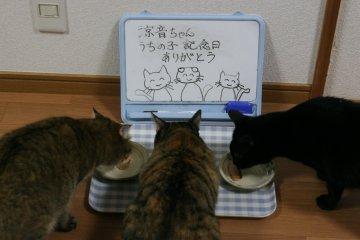 kotasuzumiyu37.jpg