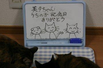 kotasuzumiyu40.jpg