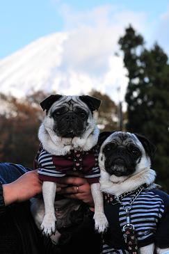 富士山と。。。 6