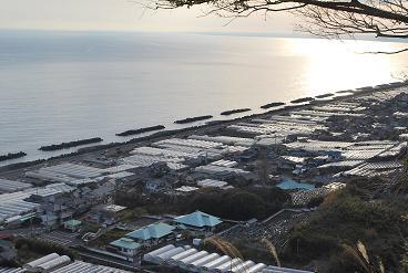 イチゴハウスと駿河湾