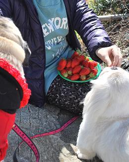 イチゴ大好き!!