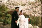 満開の桜と新郎新婦