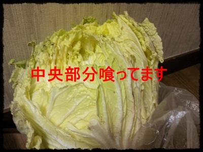 京都の旅NCM_0415