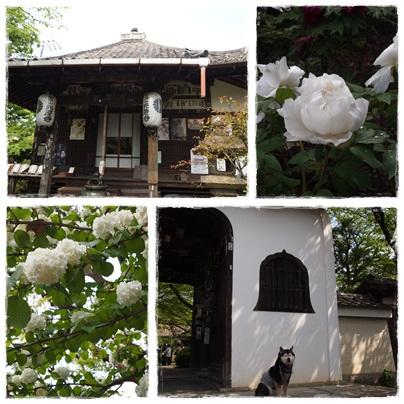 番外元慶寺