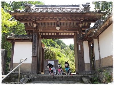 滝谷菖蒲園129