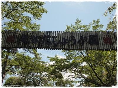滝谷菖蒲園114