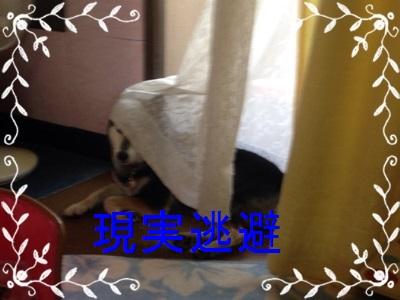 凛のベッドattachment09
