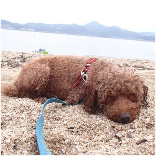 砂浜で寝るもも