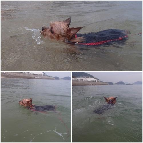 泳ぐくるみ
